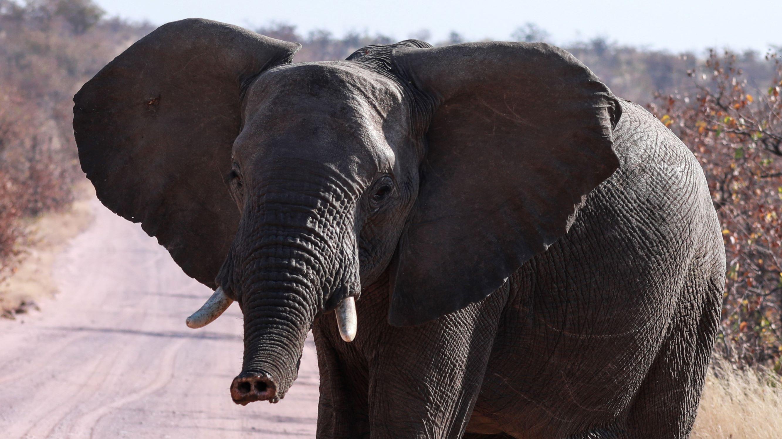 designer-diamonds-afrika-elefant-safari
